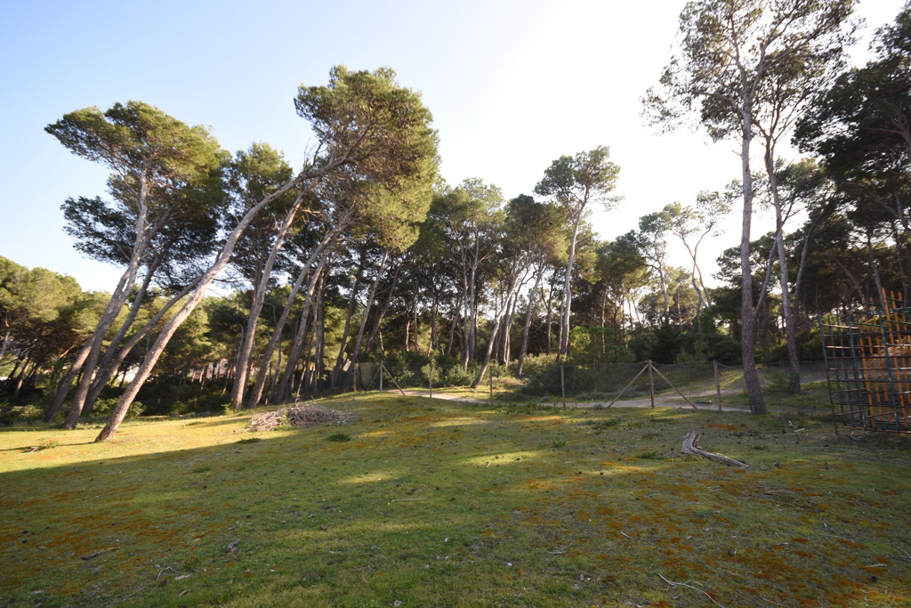 seniors-can-picafort-bosque